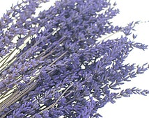 40 Lavender stems Preserved Lavandula Immortal Purple Lavendar Dried Flower Bouquet Floral Wedding Decoration Home Decor Card DIY Supplies