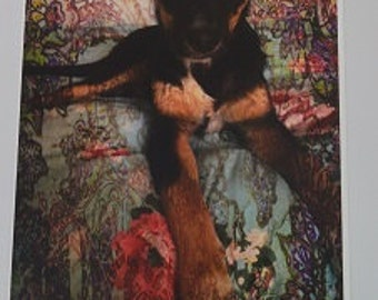 A4 Kelpie Dog Photographic Art Print
