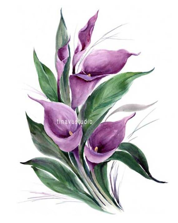 calla lily watercolor wwwpixsharkcom images