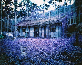 Purple Abandoned House