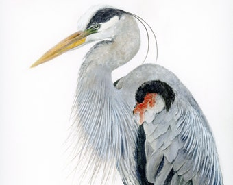 Watercolor Print, Great Blue Heron 11x14 Painting, Unique gift for Audubon Bird watcher, Nature Lover Birthday Idea, Office Wall Decoration