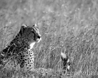Cheetah, Photography, Animal, Photo, Wildlife Photography, Black and White, Africa, Photograph, Animal Photograph, Wall Art, Nursery, Safari