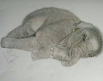 Baby Elephant limited edition print of an original pencil/coloured pencil drawing.
