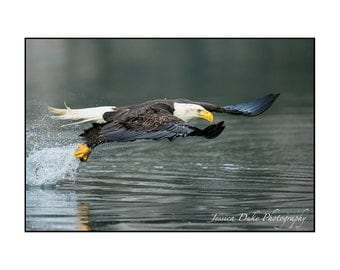 Bald Eagle Photography, Wildlife Photography, Bird Photography, Nature Photography, Alaska Art, Nautical Photography, Ready to Frame Art