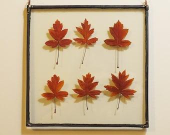 Leadlight Botanical - Crabapple Colour