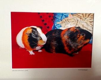 "Guinea Pigs Print, Signed Limited Edition A4 Color Animal Landscape Photograph in 40cm x 30cm (16"" x 12"") Mount"