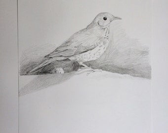 Original drawing of bird with house
