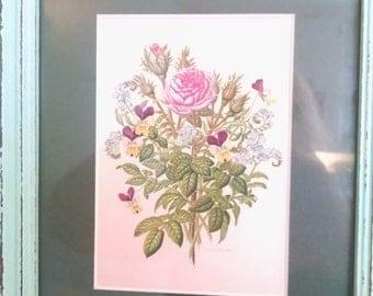 Moss Rose, botanical prints, antique floral prints, vintage pictures, viola, forget me not, Rose, botanical, flower print, flowers, vintage