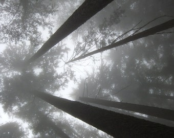 Misty Reaches