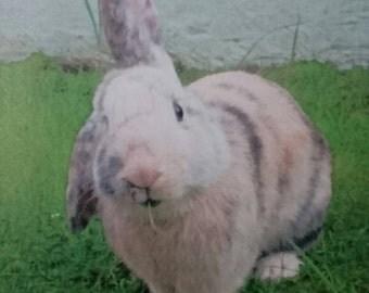 Rabbit birthday card, pet lover card, bunny card, animal card,  greetings card, personalisation available, birthday card