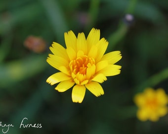 "YELLOW FLOWER (10""x8"" in a 12""x10"" mount) fine art photography"