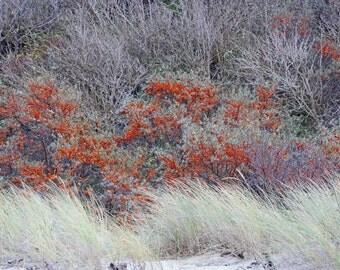 Forest Digital Photo - Berries Digital Photo - Berries Photo - Forest Photo - Autumn Mood - Digital Photo - Digital Download - Home Decor