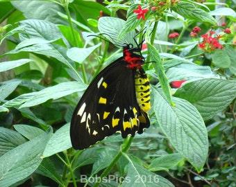 My pretty butterfly