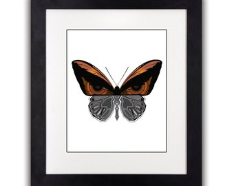 Butterfly X-Ray