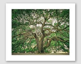 Majestic Oak Art Print, Savannah, Georgia, Oak tree, Old oak tree, wall decor, painting,