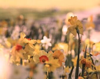 Yellow Buttercups, Brookgreen Gardens, Myrtle Beach, SC, South Carolina