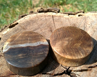 38mm (1.5 inch) fossilized wood plugs