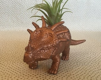 Dinosaur air plant holder + air plant