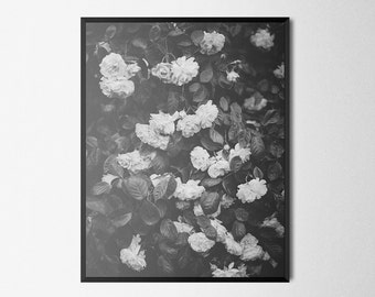 Roses Flowers Black & White Photography   Giclée Art Print