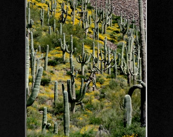 Cactus Photography
