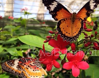 Butterflies and red flowers