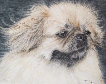 Long Haired Pekingese