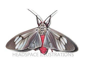 Pink and Grey Moth Bug Insect Butterfly Drawing Colored Pencil Art Print by Headspace Illustrations