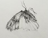 Remains, original butterfly graphite drawing, wall art