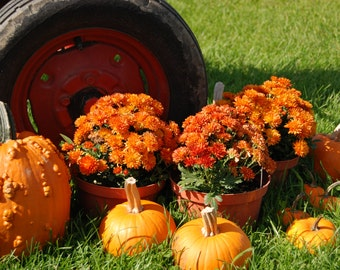 Tractor wheel with mums