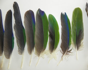Green Parrot Feathers
