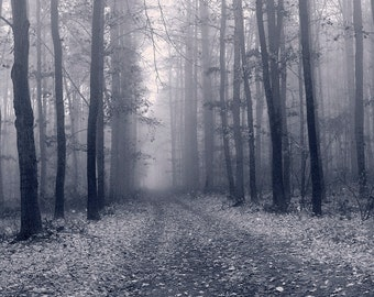 Foggy forest path. Black and white, Digital photo, fog, tree, instant download, printable, backdrop, art print, background, fog photo