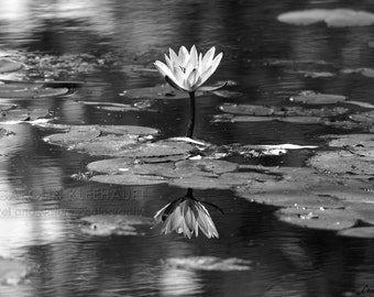 Poster / Photography Fine Art Print - Water Lily Reflections, Black & White, Nature, Contrasts, Flower - 30 cm x 45 cm