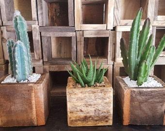 Mini Planter Boxes - 3 Pack