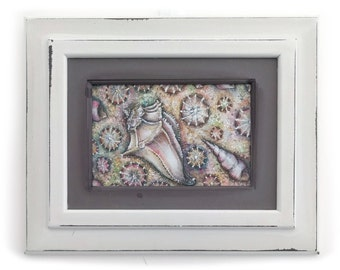 Seashells framed illustration
