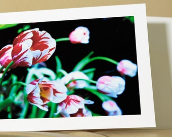 Red Tulips Photo Notecard