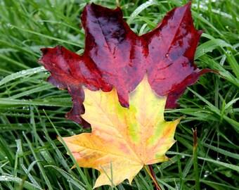 Autumn Leaves On Wet Irish Grass