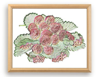 Strawberry. Ripe berry