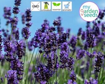 English Lavender 500 +seeds, True Lavender Seeds, Common Lavender seeds| Lavandula Angustfolia, Non treated, Non gmo, Fresh seeds 100%
