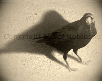 Crow Raven Wings. Black Bird. Original Digital Photograph. Wall Decor. Giclee Print. AFTER ICE CREAM by Mikel Robinson