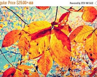 Summer Sale - Optimistic Photography, Autumn Decor, Fall Foliage Wall Art, Orange and Blue, Colorful Nature Photo, Vibrant Print