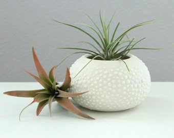 White Ceramic Air Plant Container - Small White Urchin Vase - Sweet Pea in White Small - Small Round Vase with Dots