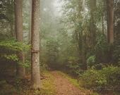 Landscape Fine Art Photograph, Appalachian Trail Photo, Maryland, Hiking, Autumn, Trail Head, Woodland, Serenity, Brown, Foggy, 8x12 Print