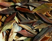 Brown, Burgundy, and Green Striated Stained Glass Shards for Mosaic Art Crafting