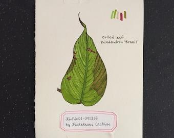 Culled Leaf Drawing No. 1