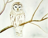 Owl illustration / watercolor painting / white owl wall art / archival print  / 8x10 11x14 'Winter Owl'