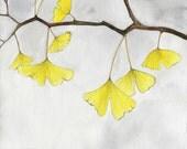 Nature watercolor plant illustration yellow autumn leaves zen fine art print 8x10 11x14 print 'Ginkgo Branch'