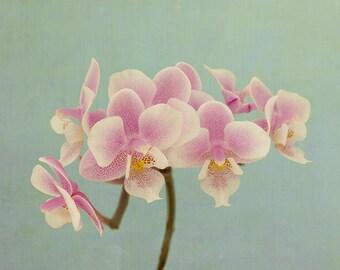 Orchid Wall Art, Orchid Print, Flower Photography, Flower Art Print, Pink Mint Home Decor