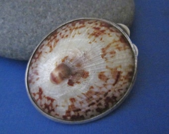 Seashell and Silver Trinket Box