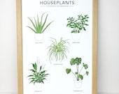 Houseplants illustration print