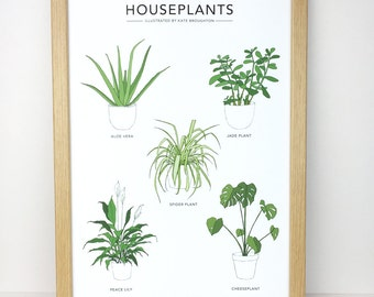 Houseplants Illustration print - pot plant poster - house plant wall art - home gift - aloe vera , cheese plant / monstera